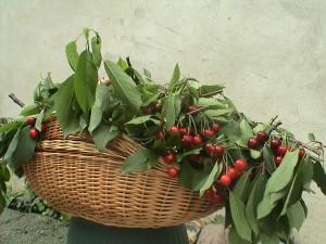 niezakazany owoc